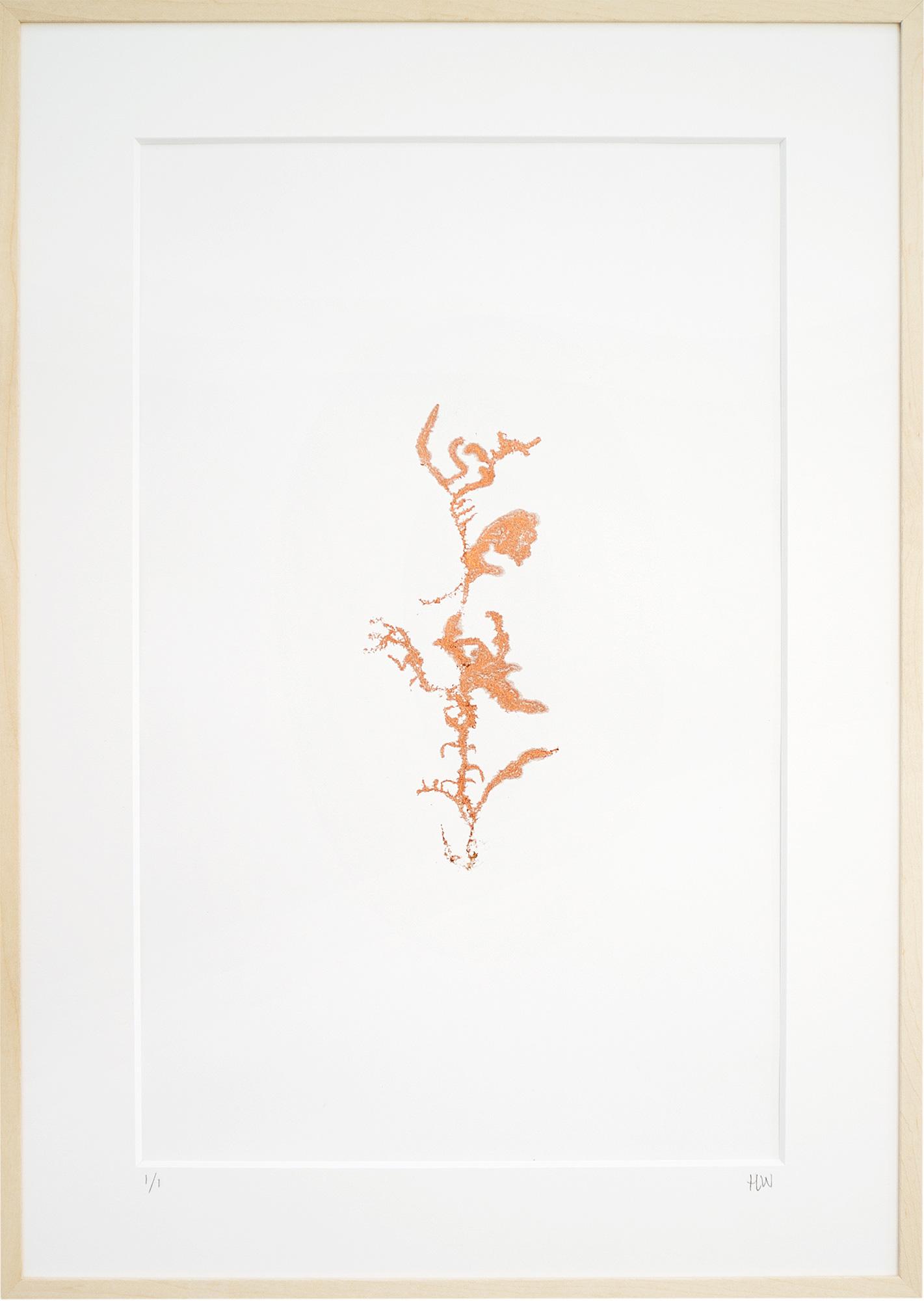 Encyclopedia-of-newfound-plants-14.jpg