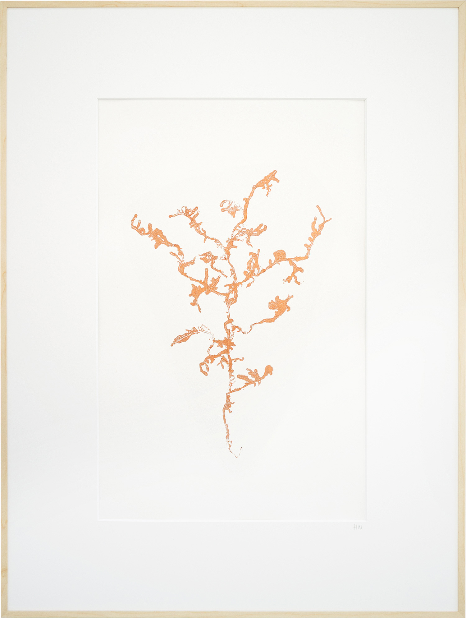 Encyclopedia-of-newfound-plants-17.jpg