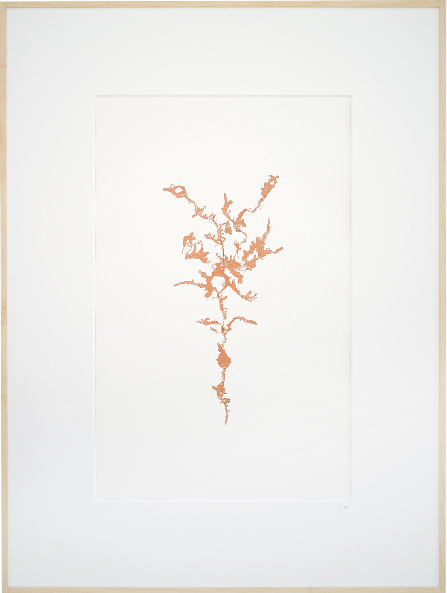 Encyclopedia-of-newfound-plants-15.jpg