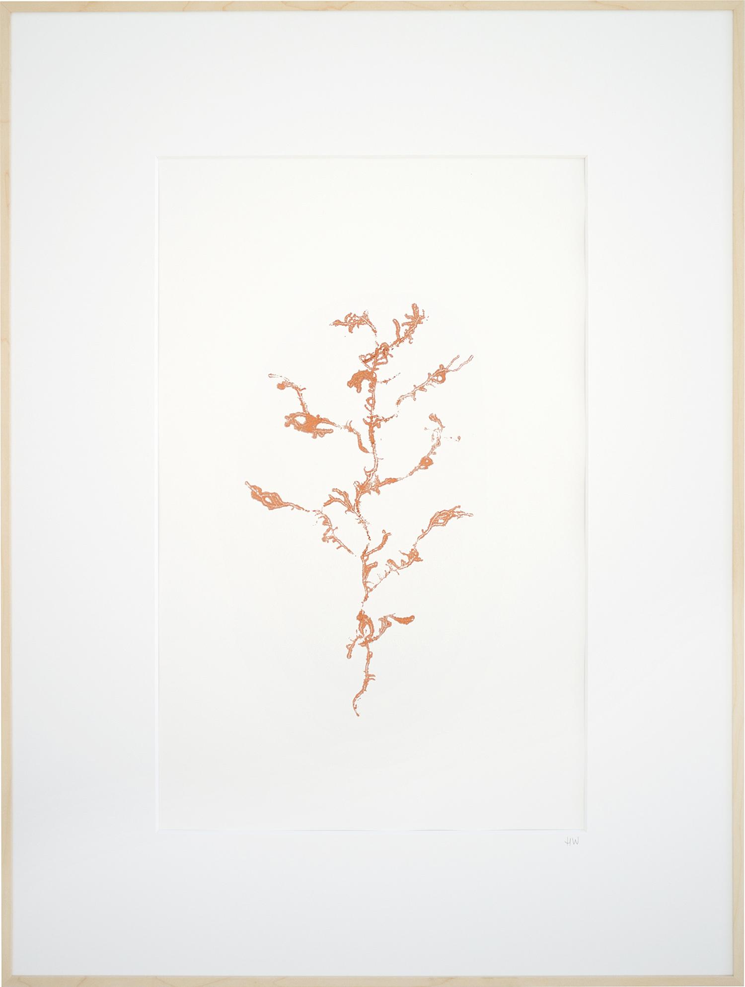 Encyclopedia-of-newfound-plants-16.jpg