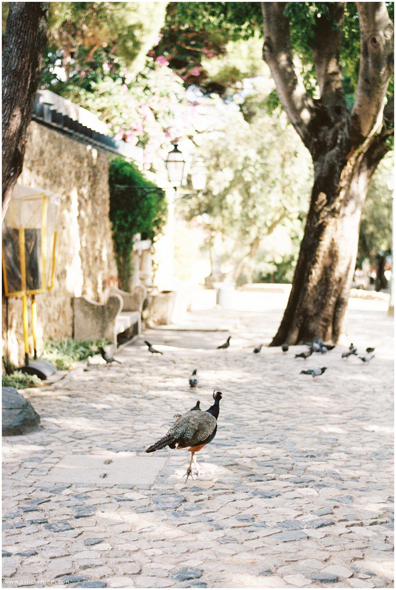 Jessica K Feiden Photography_Portugal Film Photographer_Portugal Travel Photographs_0017.jpg