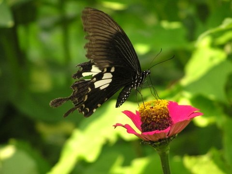 Butterfly, Nam Tha River, Northern Laos