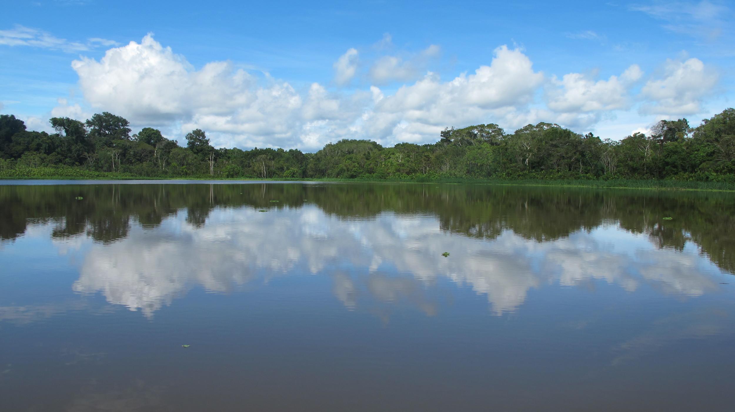 Amazon outback, Peru