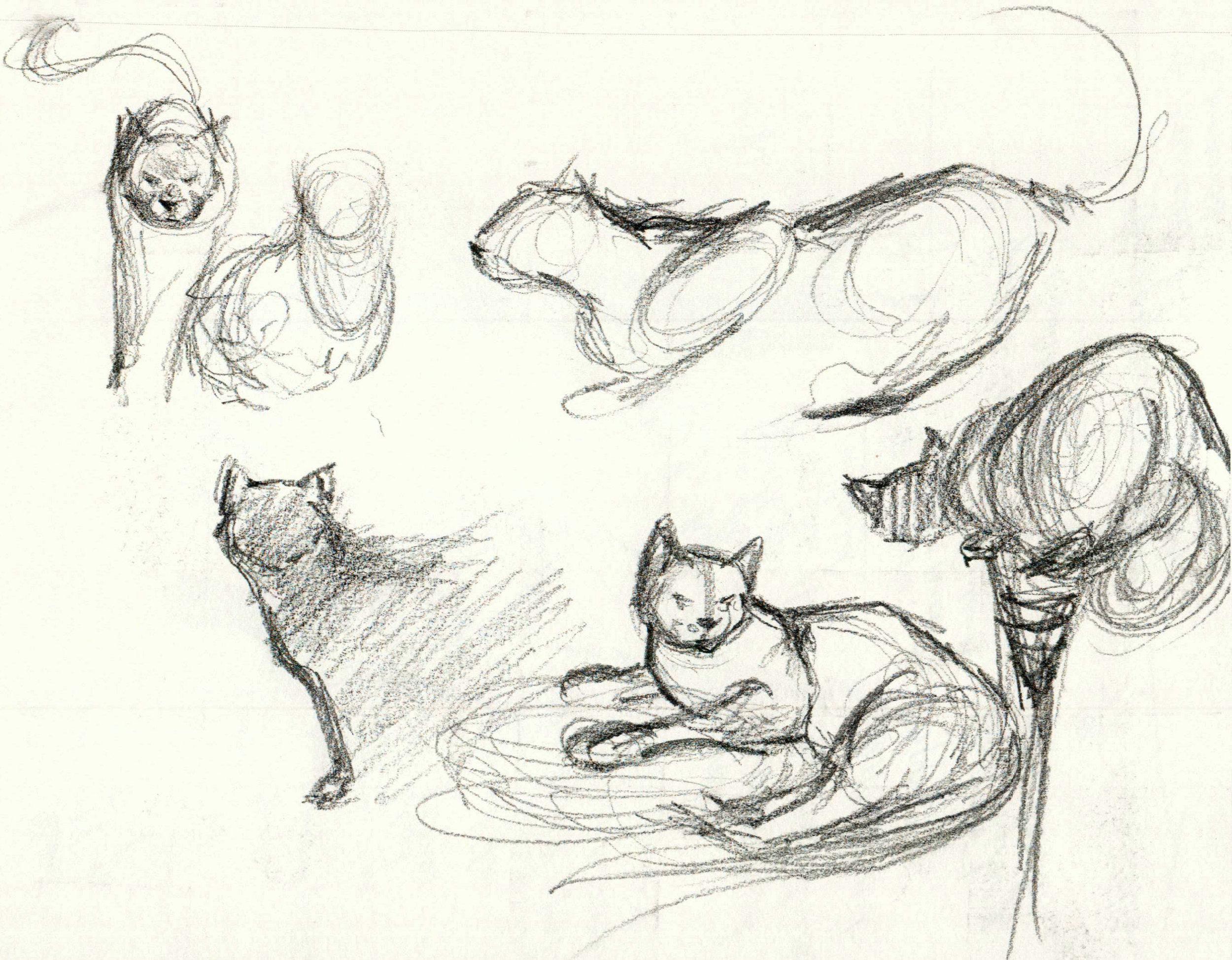 catSketches.jpg
