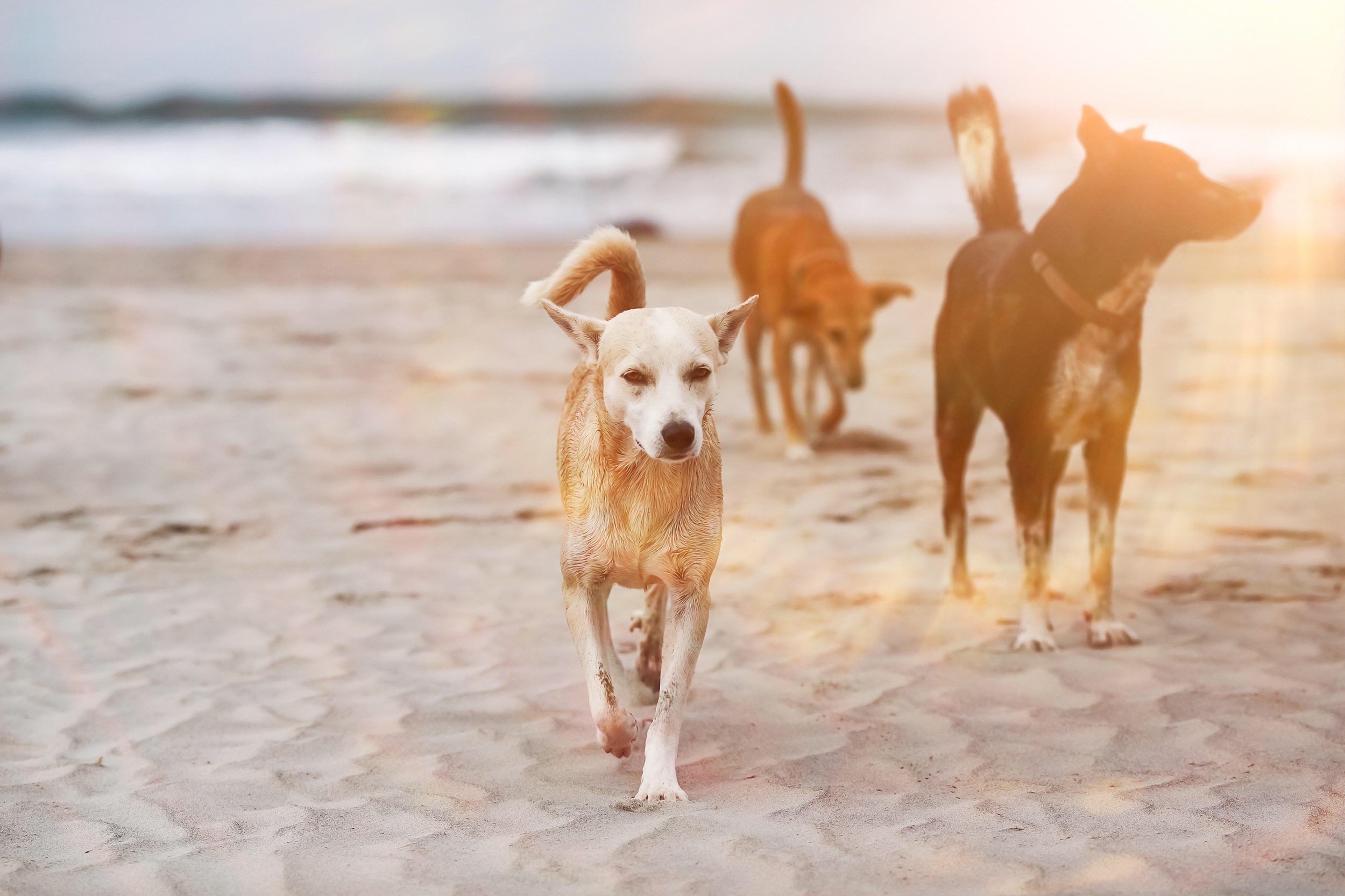 Dogs on a Beach The Last Plus One Romance