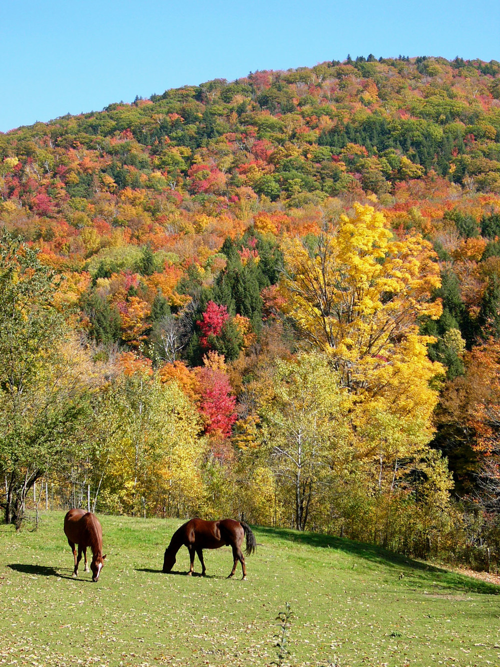 Vermont Horses Honorable Mention