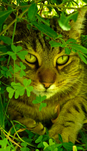 Bindi in the clovers-3rd place