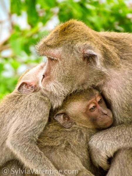 Monkey Love Bali