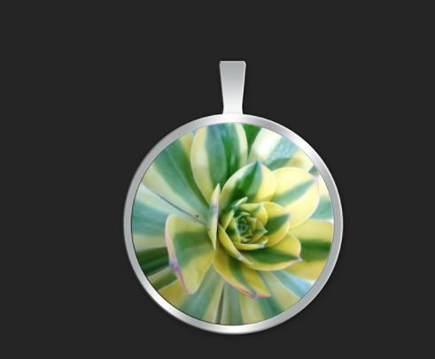 Succulent Hybrid small round $35