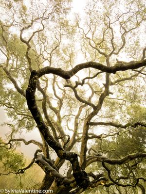 Tree Heart, CA