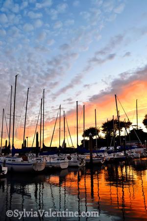 Santa Cruz Orange Harbor