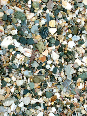Shell Beach New Zealand