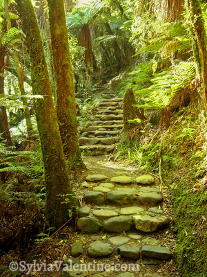 Fairy Path New Zealand