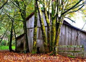 Eureka Canyon Barn
