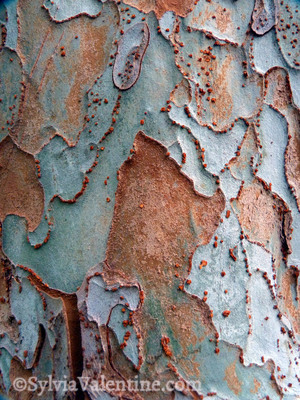 Rust Gray Bark