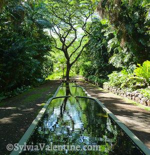 Allerton Reflection, Kauai