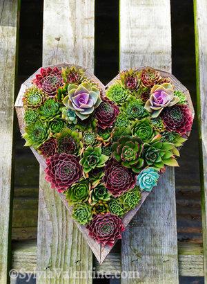 Wood Heart (Succulent Gardens), CA