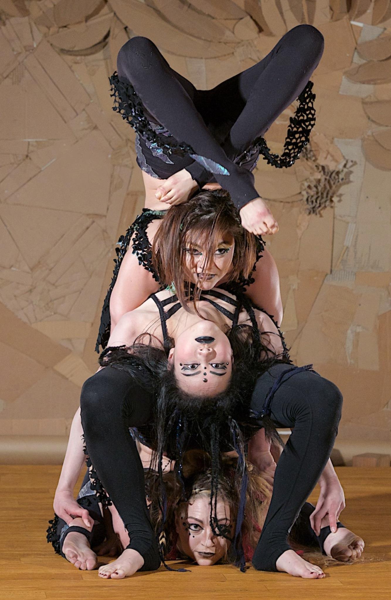 aryn group contortion.jpg