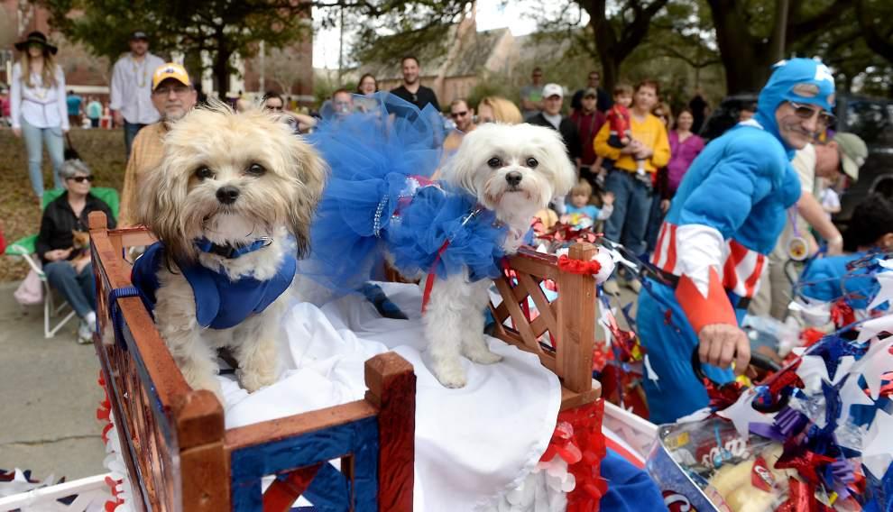 Mardi Gras Dogs.jpg