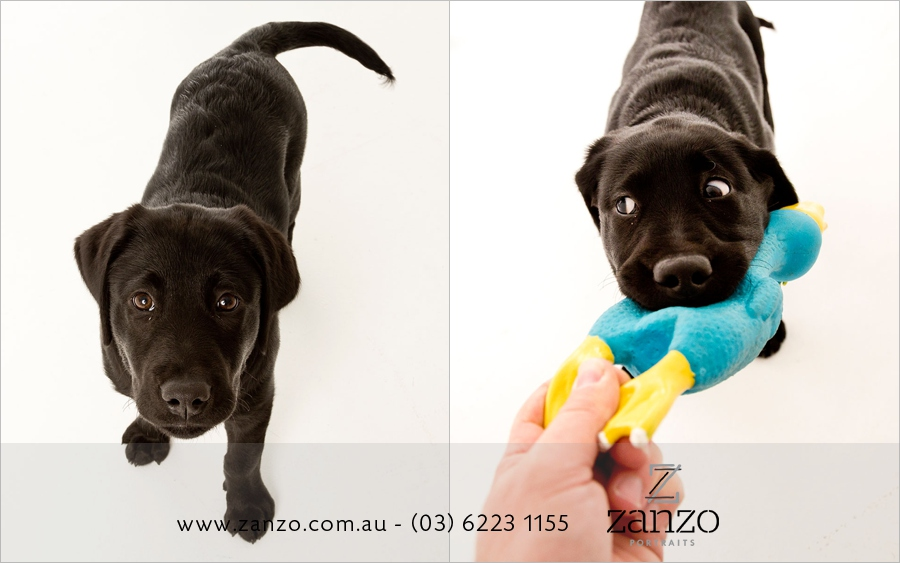 ooo that's my thumb! Super strong puppy teeth and crazy eyes had me laughing for ages during this shoot!.