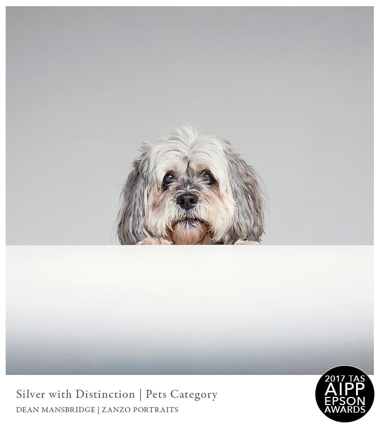 5SilverDist2017_Pets04.png