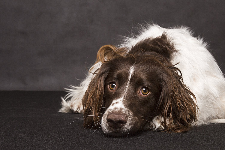 zanzo_portraits_hobart_photographer_tasmania_family_pets_dog_0050.jpg