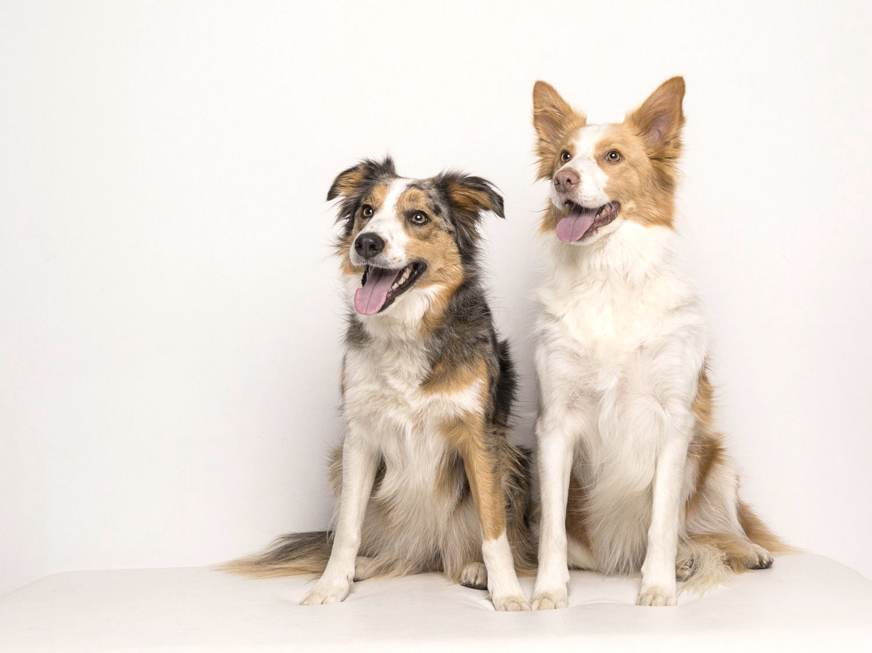 zanzo_portraits_hobart_photographer_tasmania_family_pets_dog_0011.jpg