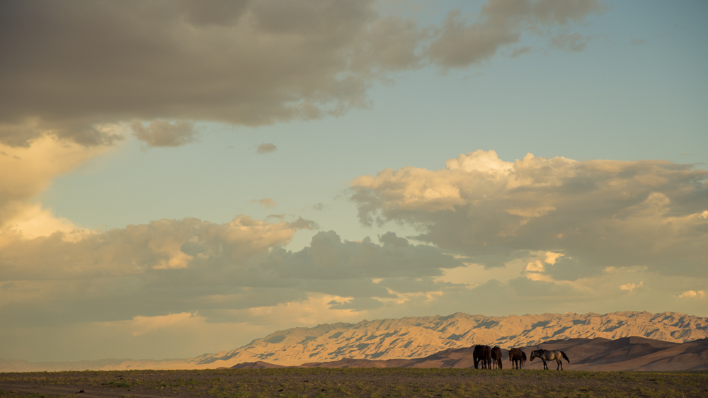 Horses graze upon what nourishment they can find, before a mountain range of sand that stretches for 100's of kilometres in the Gobi Desert.