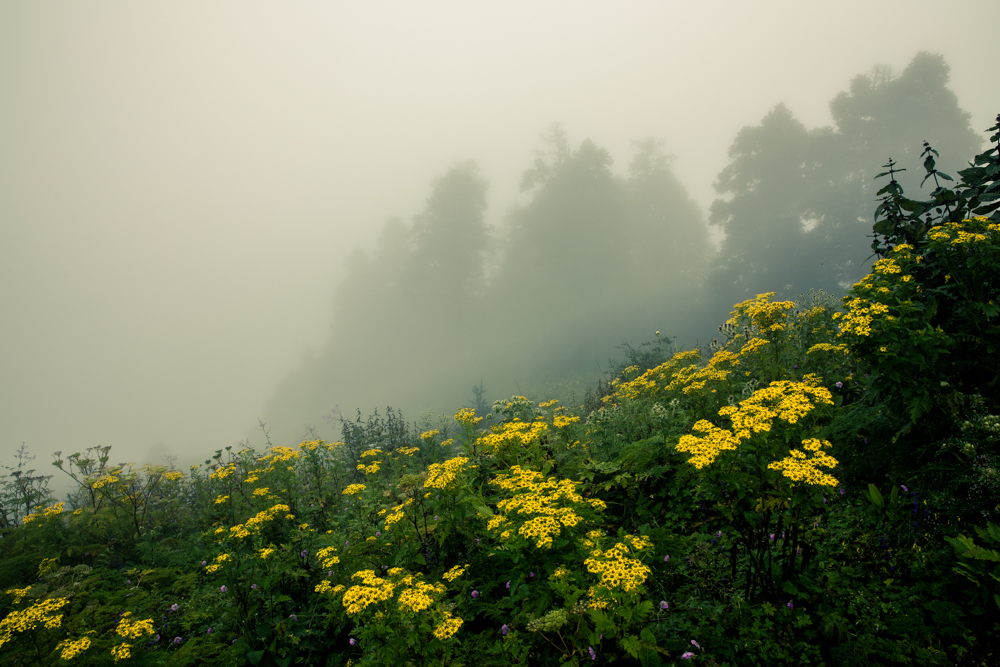 Day 3 of an 'easy' 6 day hike in the Himalayas. Mists hung about the trees, creating a strange atmosphere, hemming us in at around 3000 metres altitude.