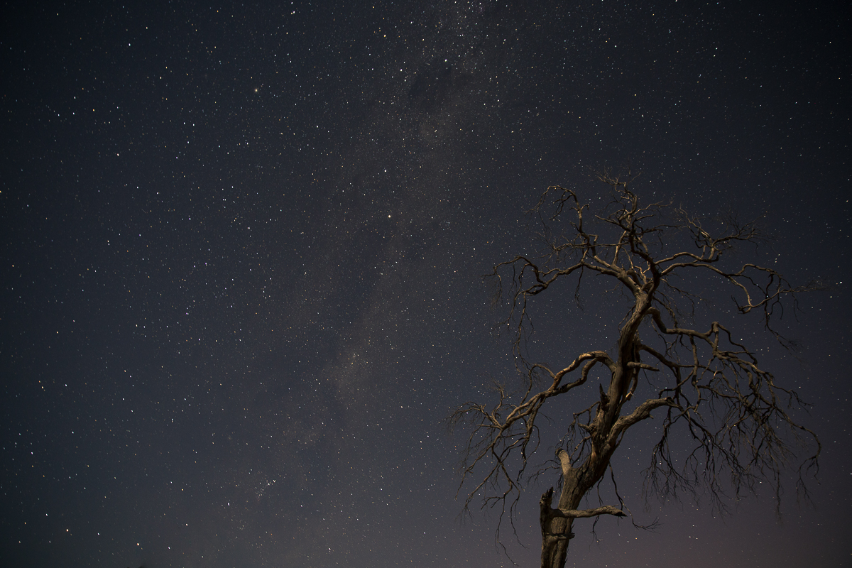 The Milky Way, as witnessed by this skeleton tree on clear nights, in the icy Tasmanian midlands.