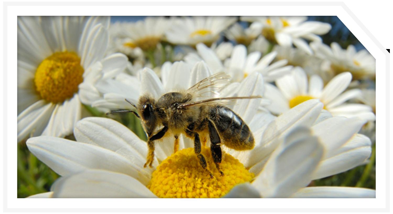 POST_PROJ_bee-exhibit-2.png
