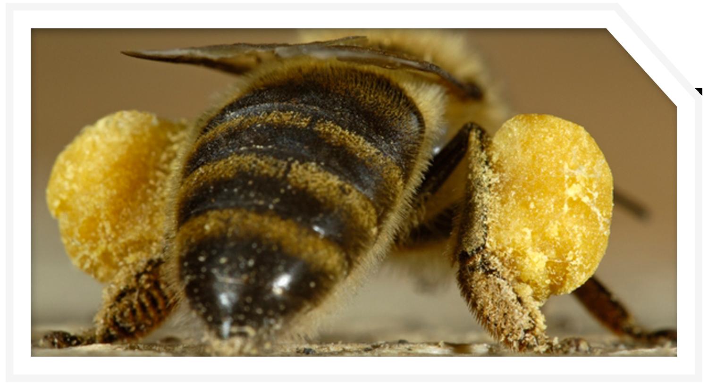 POST_PROJ_bee-exhibit-3.png