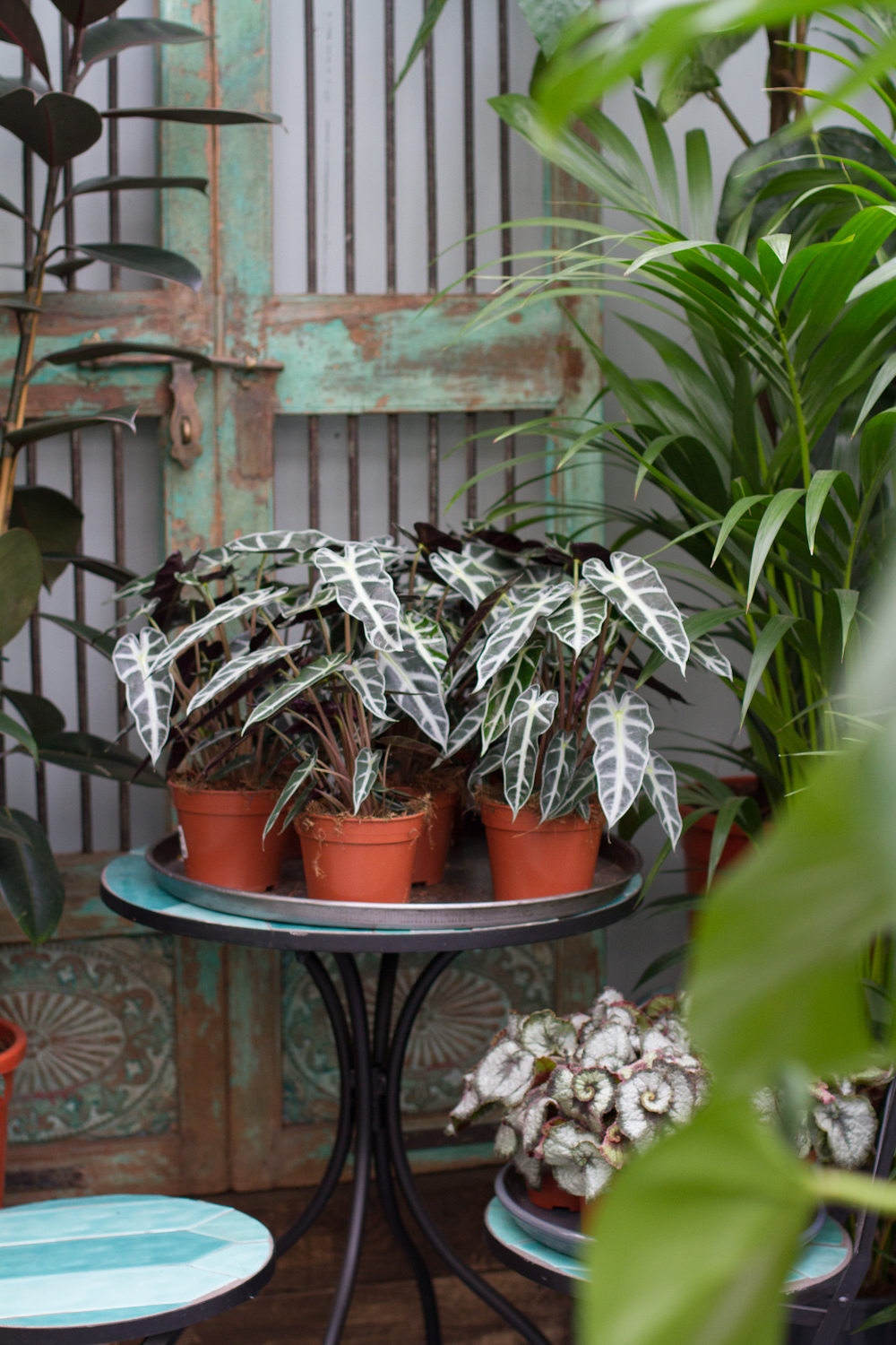 Houseplants and Shop Products