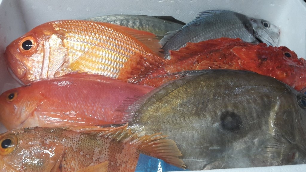 Just a taste of what's out there... Some beautiful iki jime variety from  Leefish New Zealand.