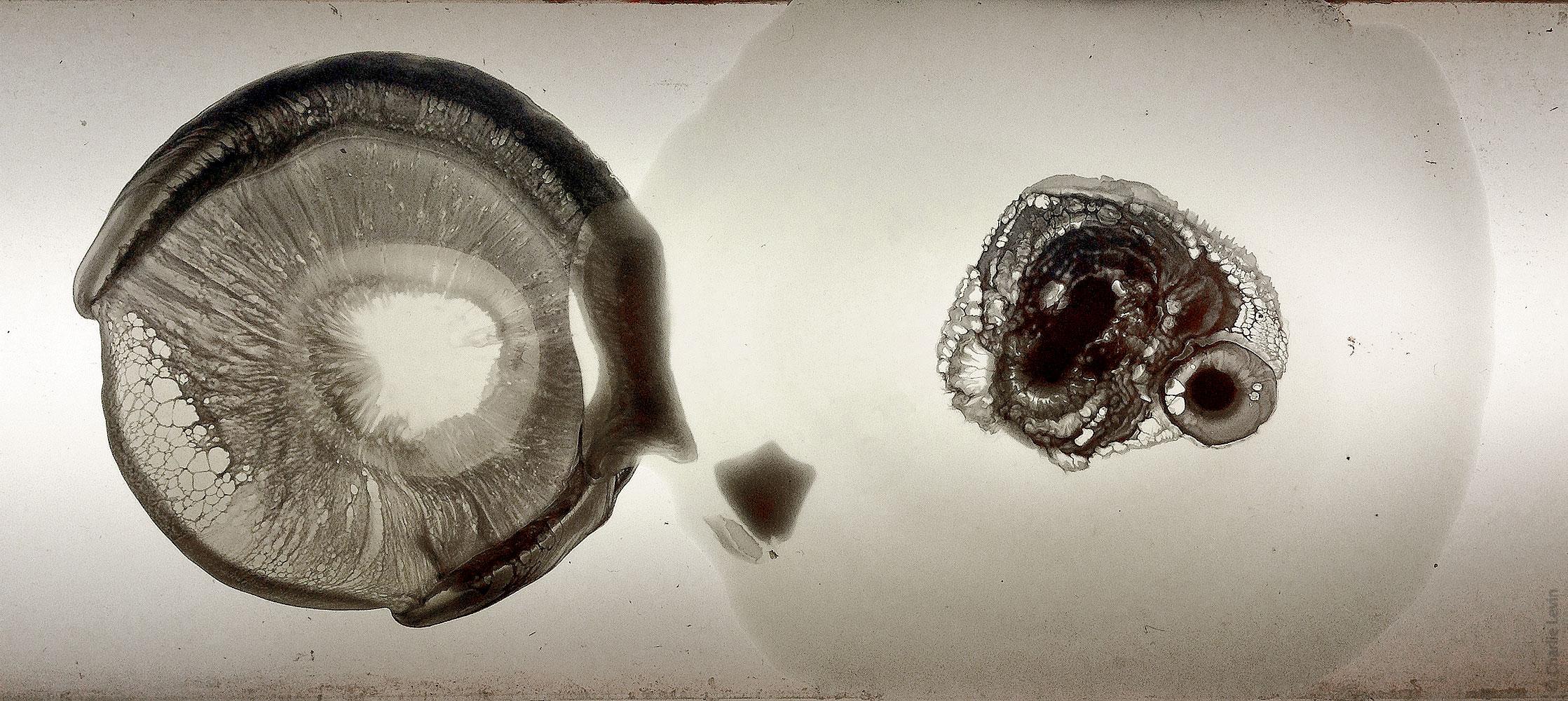specimens1_detail1_1000h_wWM.jpg