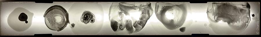 specimens1_900x128_wWM.jpg