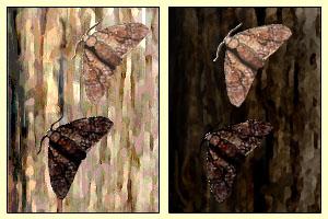 peppered+moth.jpg