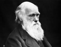 Darwin.bmp