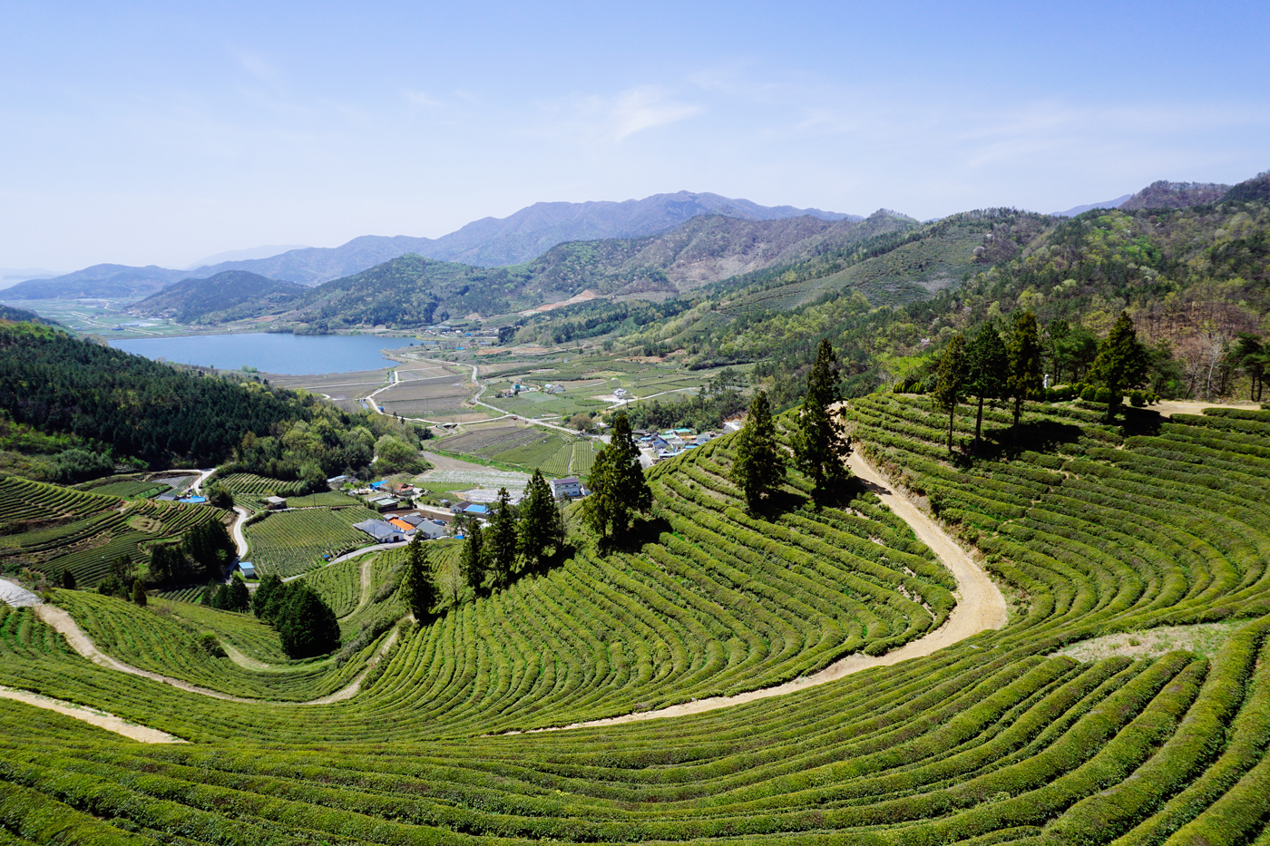 Namhae (남해)Road Trip Series: Boseong Green Tea Plantation (보성녹차밭 대한다원),South Korea.