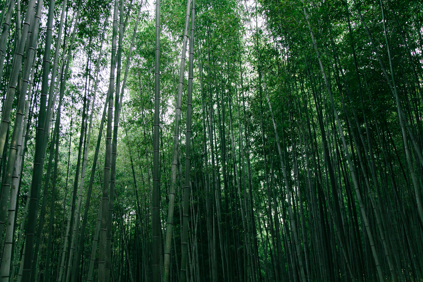 Namhae (남해) Road Trip Series: Damyang Bamboo Forest (담양대나무숲), South Korea.