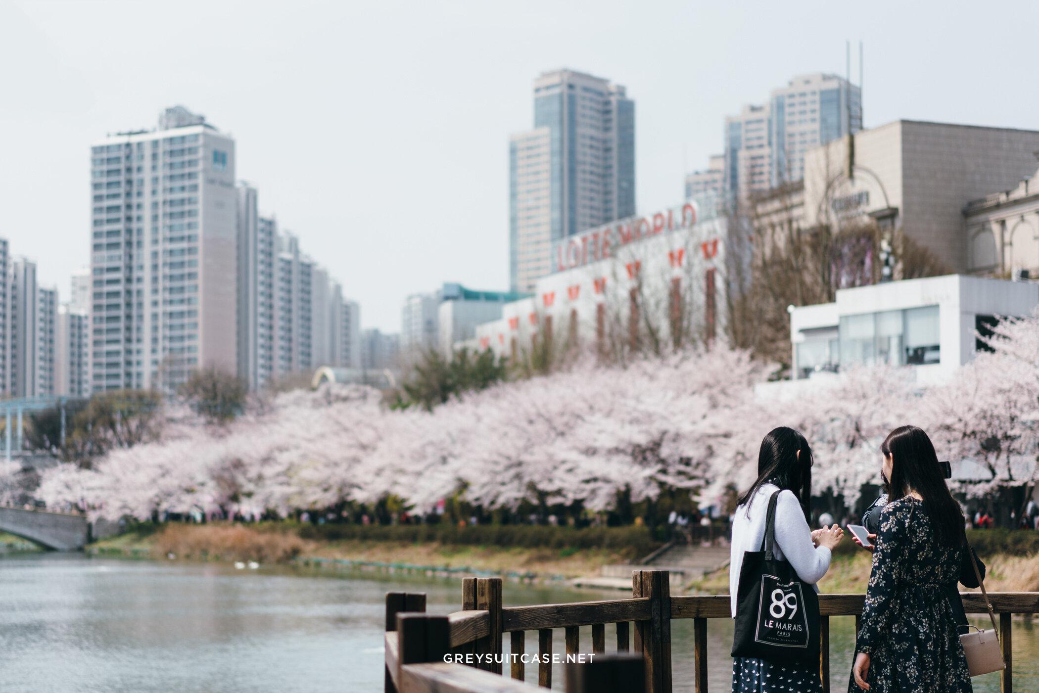 Greysuitcase Travel Series - Seoul Spring '17 - Cherry Blossom at Seokchon Lake (석촌호수공원), Seoul, South Korea.