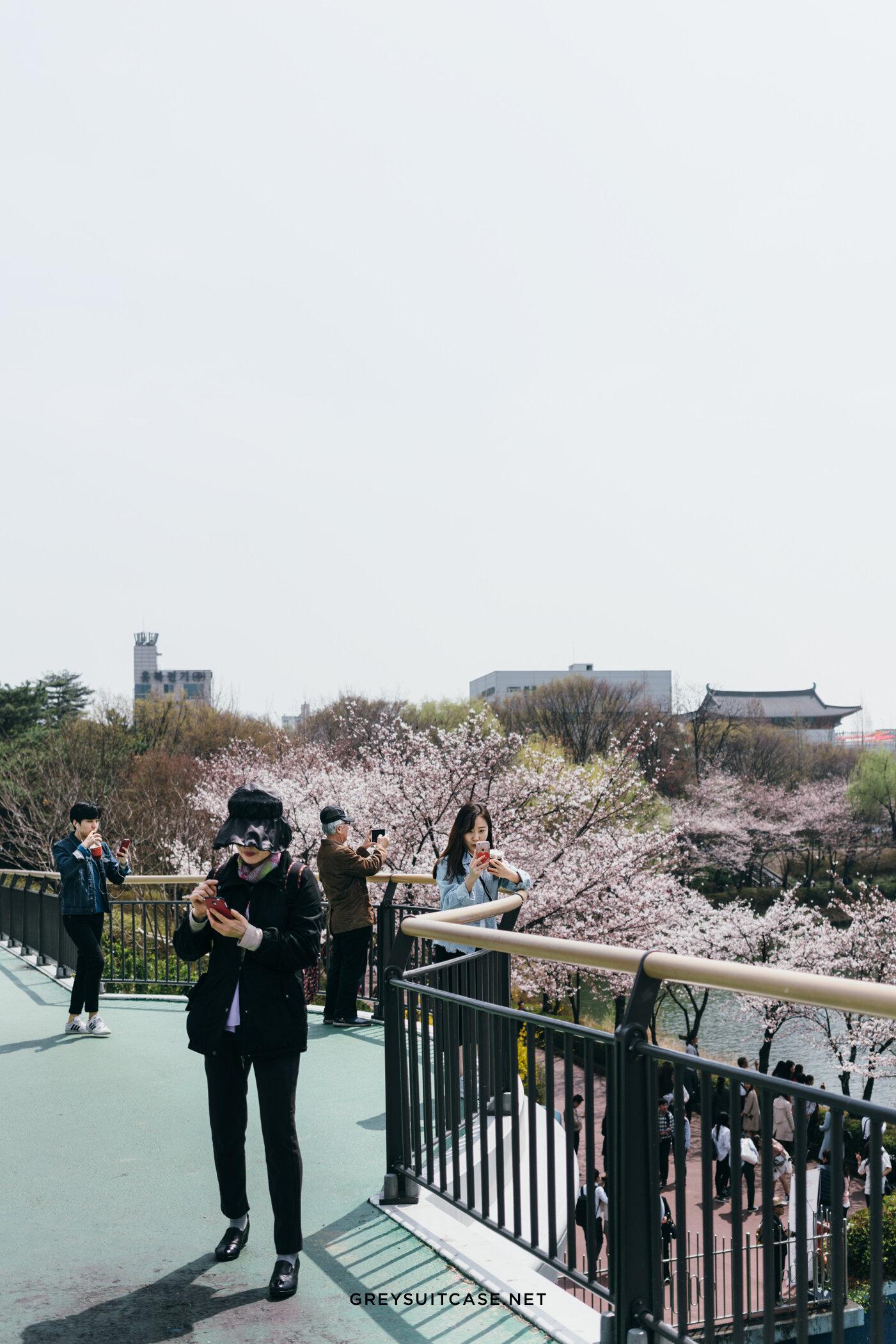 Greysuitcase Travel Series - Seoul Spring '17 - Seokchon Lake Park (석촌호수공원), Seoul, South Korea
