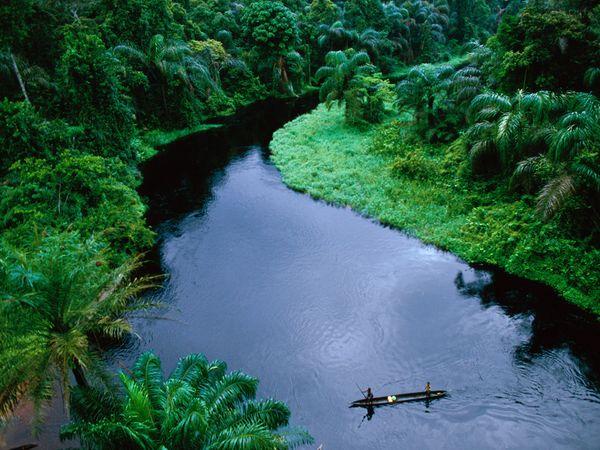 Jungle in the Congo