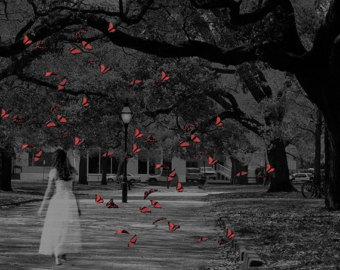 """""""Butterfly Whisperer"""""""