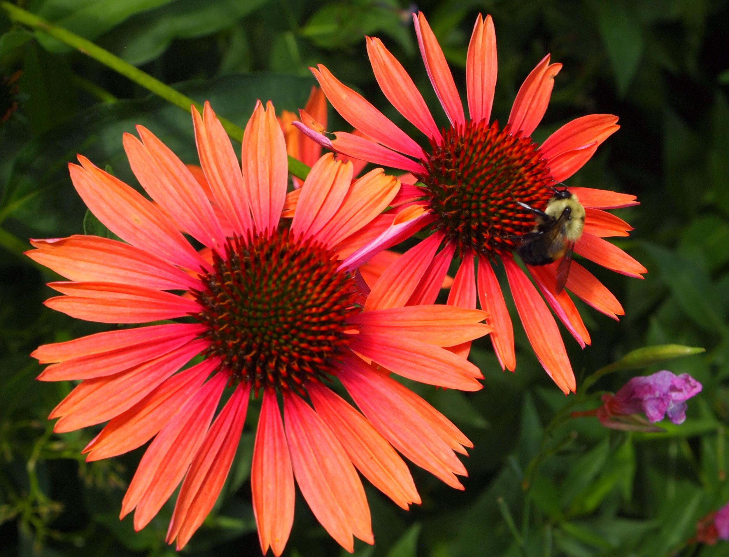 Mid Summer Pollinators