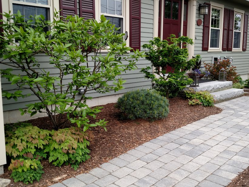 North foundation plantings in bright shade, including 'Mikawa Yatsubusa' japanese maple next to front door.