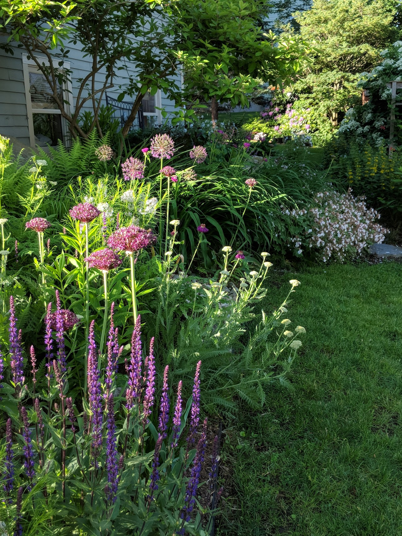 'Miami' allium (foreground) and 'Purple Sensation allium (behind) add interest and structure to this west facing perennial bed