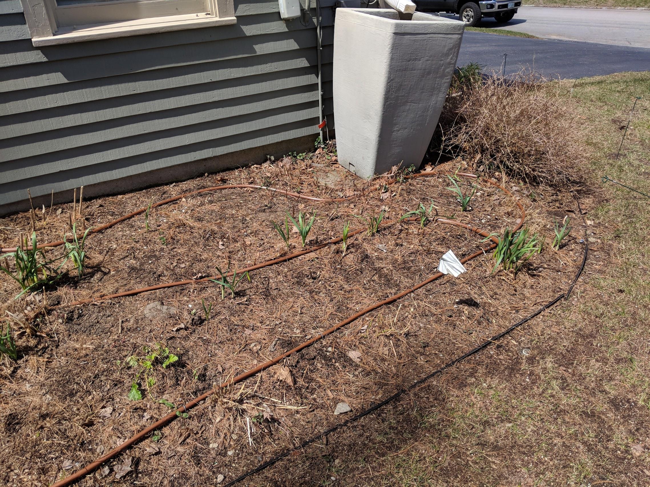 Drip irrigation  installation begins