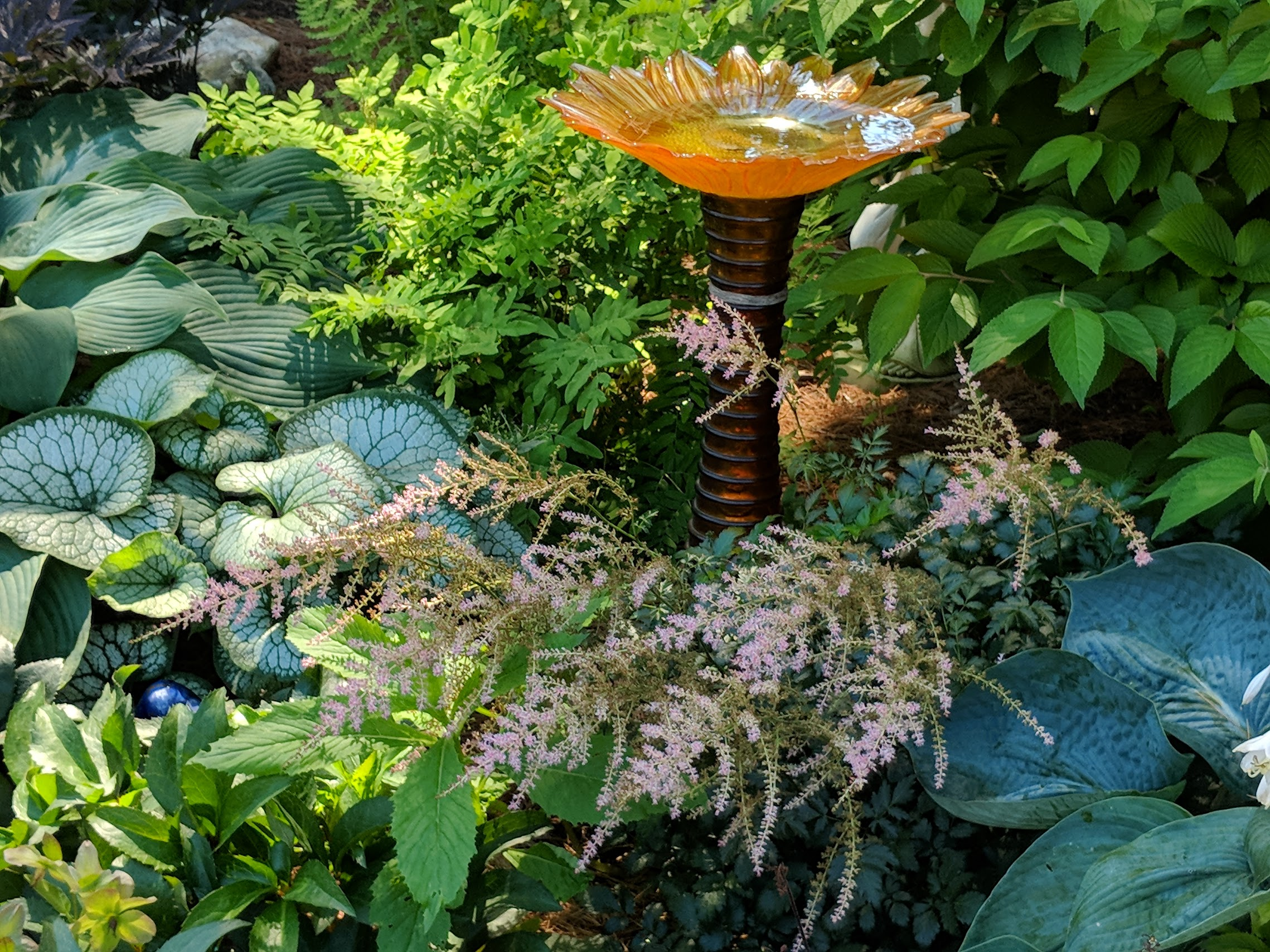 Locally made glass bird bath helps to break up dense foliage of hosta, ferns and brunnera and draw attention to the lovely pink astilbe blooms