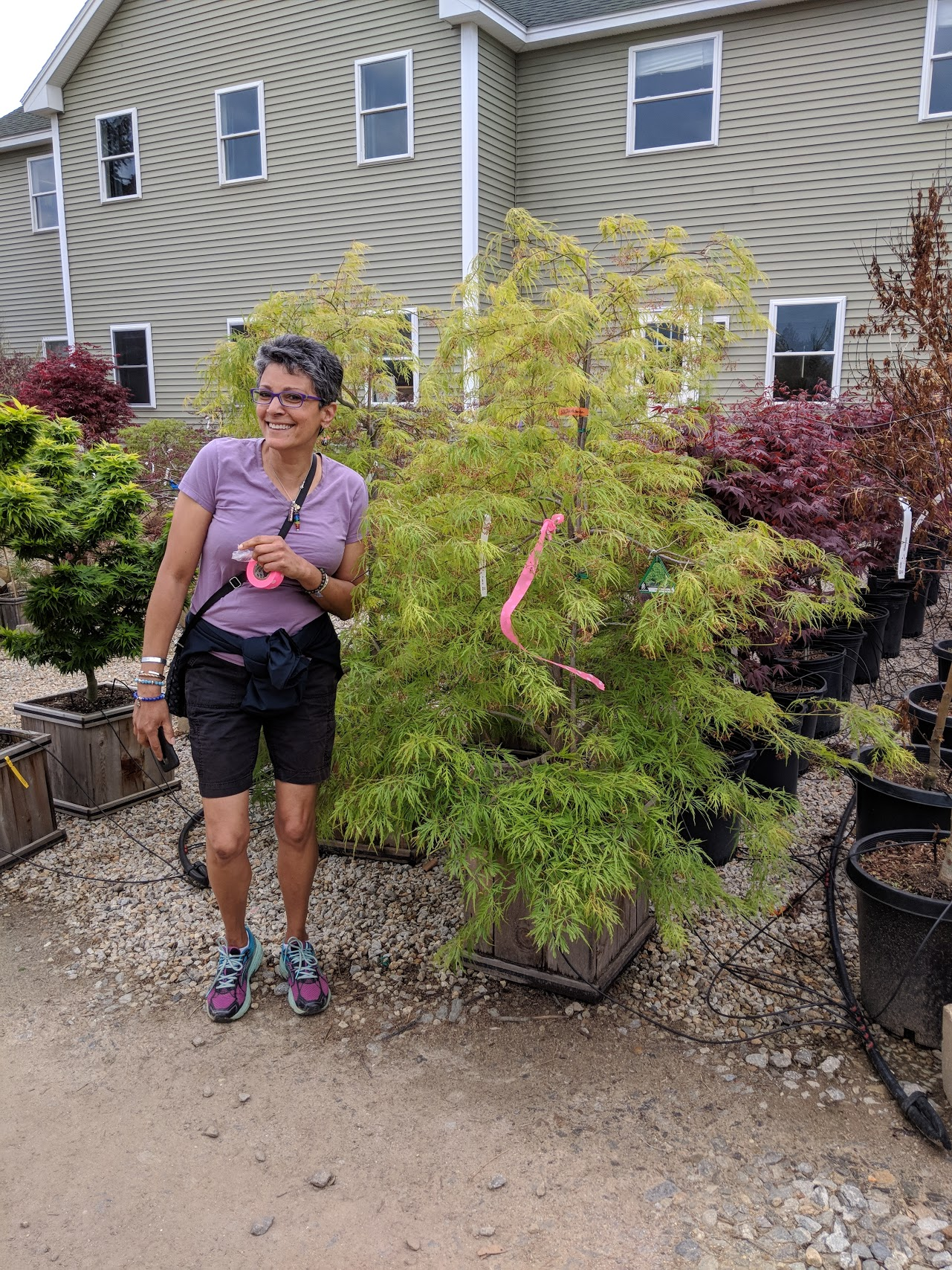 We both fell in love with this laceleaf Japanese Maple which is just perfect for our entrance.
